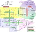 Steroidogenesis.png