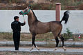 Studfarm in Turkmenistan - Flickr - Kerri-Jo (110).jpg