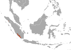Sumatran Striped Rabbit area.png
