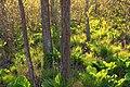 Swamp Walk (3) (8709361256).jpg