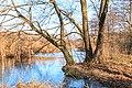 Tůně u Bohdanečského rybníka 04.jpg