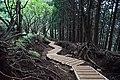 Tanzawa's trail (49441922263).jpg