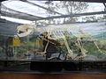 Taronga Zoo (6182497966).jpg