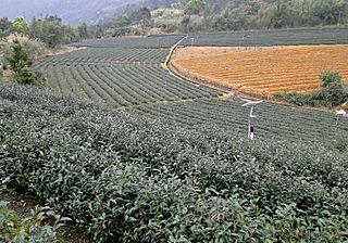 Taiwanese tea culture