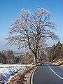 Teuchatz Berg Winter2180310.jpg