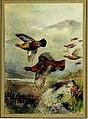 The British bird book (1921) (14569144277).jpg