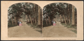 The Lover's Walk. Scene on Goat Island, Niagara, from Robert N. Dennis collection of stereoscopic views.png