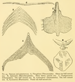 The Osteology of the Reptiles-138 iujhg g.png