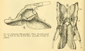 The Osteology of the Reptiles-162 ijhijh iohjhjhjk ghj.png
