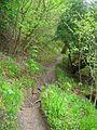 The Teesdale Way in Spring - geograph.org.uk - 1287749.jpg
