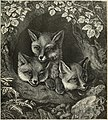 The Three Smart Little Foxes.jpg