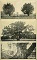 The new international encyclopaedia (1905) (14774000104).jpg