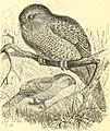 The royal natural history (1893) (14598105910).jpg