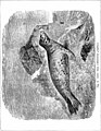 The seals and whales of the British seas (1881) (14743548476).jpg