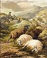 Thomas-sidney-cooper-the-highland-flock.jpg