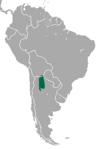 Argentine fat-tailed mouse opossum - Image: Thylamys sponsorius area