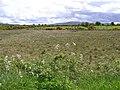 Tirglassan - geograph.org.uk - 435283.jpg