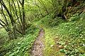 Trail in Slovenia 6.jpg