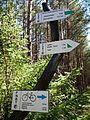 Trails in Bory Tucholskie National Park (3).jpg