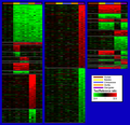 TreeView Images of LS Genes for Different Hominoid Lineages and Lineage Combinations Ranked as a Function of aCGH Ratio - journal.pbio.0020207.g007.png
