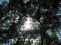Tree - Flickr - treegrow.jpg