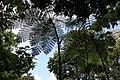 Tree Fern St. Lucia.jpg