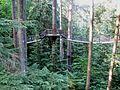 Tree Walk - Flickr - brewbooks.jpg