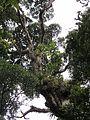 Trees in a tree in a tree (6706348747).jpg