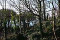 Trees on Pendennis headland (2180568941).jpg