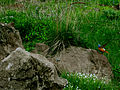 Truso valley 15362 (9104212951).jpg