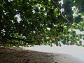 Under the Canopy (8727095069).jpg
