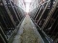 Undercover Investigation at Manitoba Pork Factory Farm (8250111757).jpg