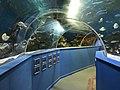 Underwater Tunnel Blue Reef Aquarium Tynemouth.jpg