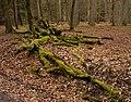 Unterhölzer Wald-3561.jpg