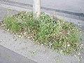 Végétalisation naturelle pied d'arbre.jpg