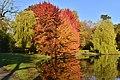 Variété de rouges au second étang Tenreuken (22485049138).jpg