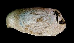 Neithhotep - Image: Vase of Neithotep