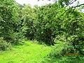 Vazhachal Reserve Forest - panoramio.jpg