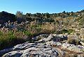 Vegetació i ribera de roca del riu Gorgos.JPG