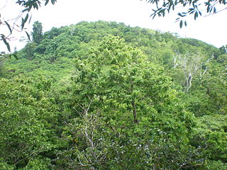 Samoan tropical moist forests