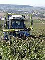 Vigne Pinot Noir (Efeuillage) Festigny Cl.J.Weber18 (23651640546).jpg