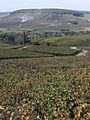 Vignes (Coteaux de Festigny.51) Cl.J.Weber03 (23309720579).jpg