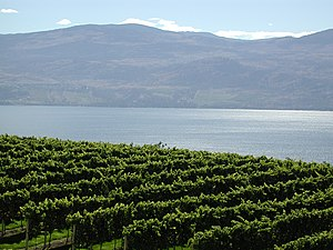 British Columbia - The Okanagan region has a climate suitable to vineyards.