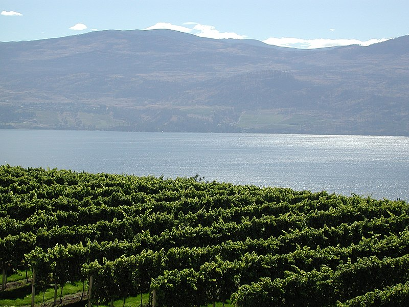 Datei:Vineyards Lake Okanagan.jpg