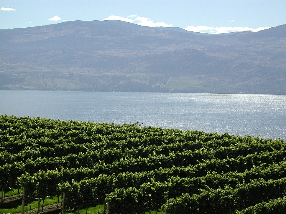 Vineyards Lake Okanagan