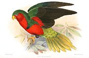 Drawing of green parrot with red face and belly, green and black wings, and yellow tail