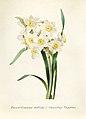 Vintage Flower illustration by Pierre-Joseph Redouté, digitally enhanced by rawpixel 02.jpg
