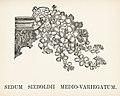 Vintage illustrations by Benjamin Fawcett for Shirley Hibberd digitally enhanced by rawpixel 71.jpg