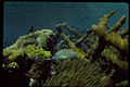 Virgin Islands National Park VIIS2310.jpg