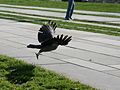 Vogelstart.jpg
